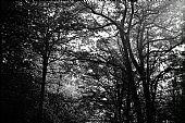 Lenta Conversazione - Montechiarugolo 2012