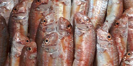 Primo d'Aprile 2019 pesce d'aprile