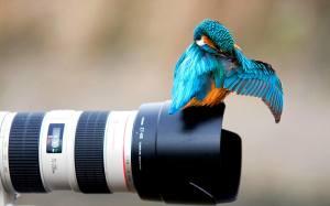 P-gphoto