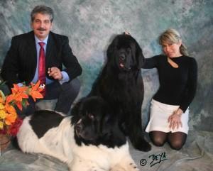 Allevatori di Animali Domestici Thickish Newfoundland