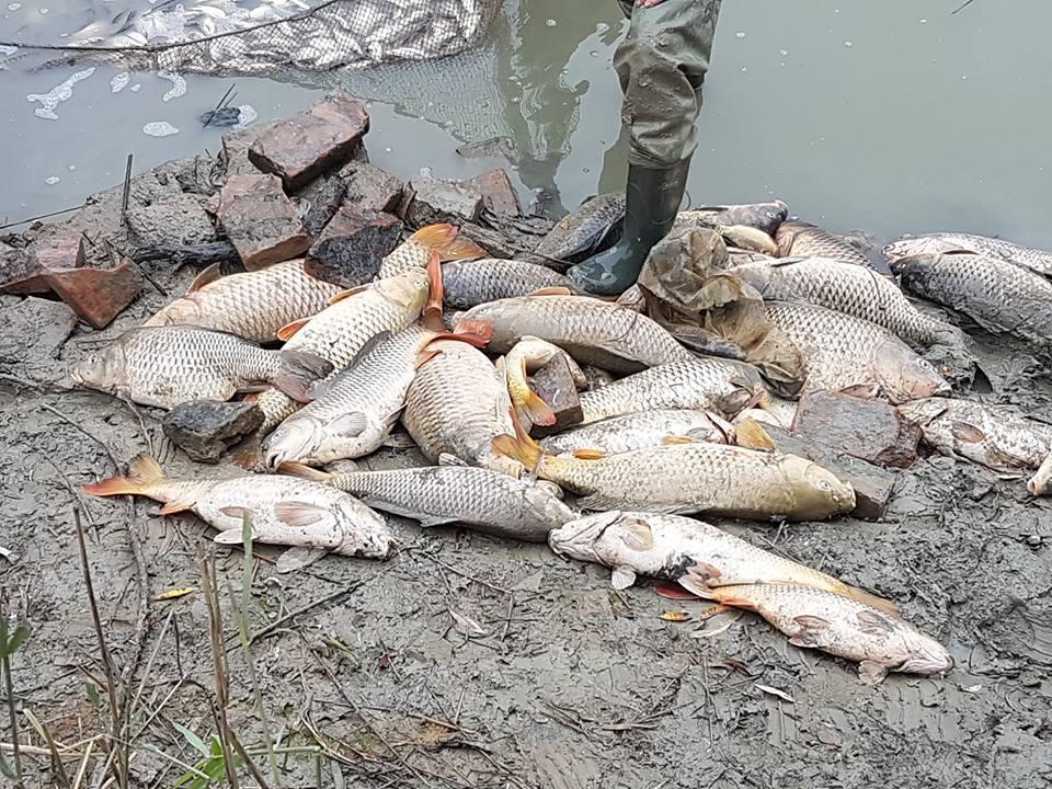 Circa 300 pesci recuperati morti dal canale Cavo Lama,MO