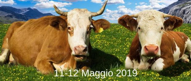 Fiera di Maggio a Basilicanova 2019