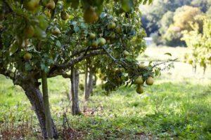 Allarme per carenza di manodopera agricola, finalmente si lavora?