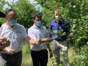 Agricoltura, lotta biologica contro la cimice asiatica