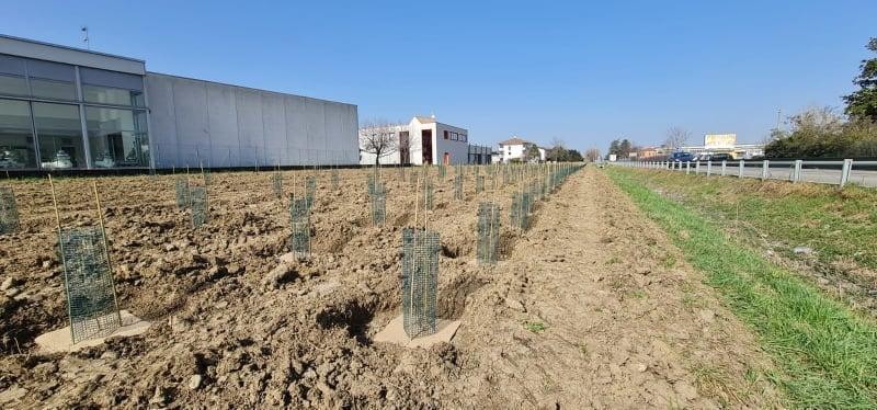 Mutti e le piantumazione di 1100 piante 2021 Parma